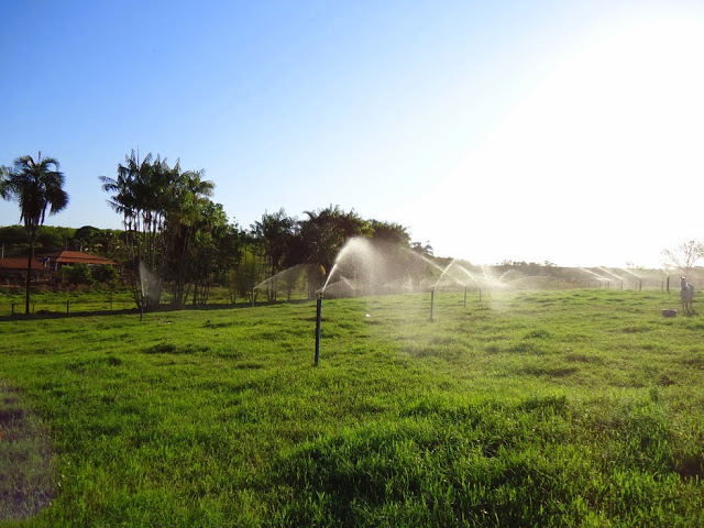 Resultado de imagem para pastejo rotacionado irrigado